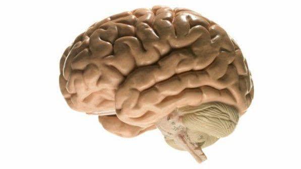 Sonhar com cérebro